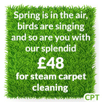 steam cleaner rental